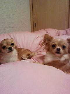 右:ミルママ 左:ユナ