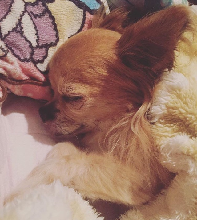 ユナのブログ